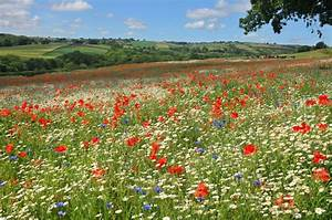 Grass & Wildflower seed mix - for the back of the garden ...