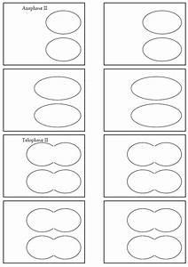 Mitosis Flip Book Diagram Masters Answer Key