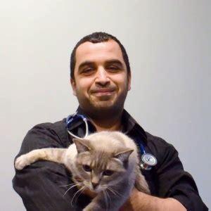 chronische enteropathie bei katzen