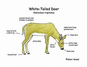 Coyote Vitals Diagram