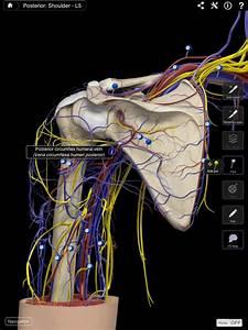 Shoulder Pro  U2013 Complete Anatomy