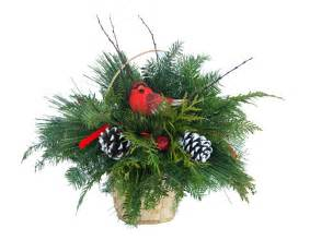mail order live christmas cardinal centerpiece online plants beautiful christmas trees