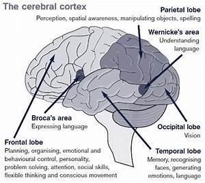 About Brain Injury  U2013 Headway Guernsey Headway Guernsey