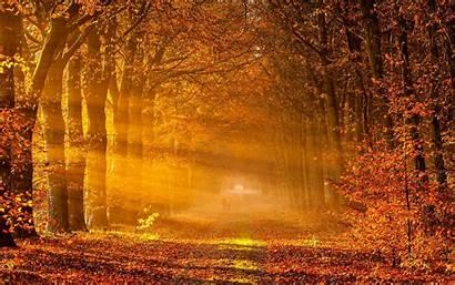 Autumn Wallpapers Fall Desktop Backgrounds Woods Nature