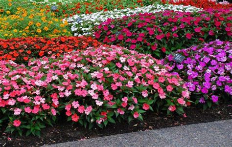 shrubs that bloom all summer top 28 shrubs that bloom all summer 17 stunning plants that bloom all summer long