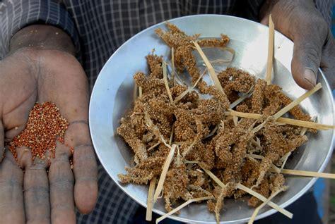 millet cuisine caes finger millet
