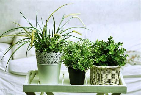 plante dans une chambre 5 plantes d intérieur pour décorer la chambre à coucher et