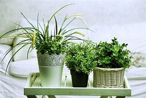 5 plantes dinterieur pour decorer la chambre a coucher et With plante verte pour chambre a coucher