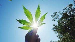 Top Marijuana S... Pot Stock Quotes