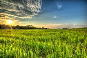 Chinese scientists to develop high-yield sea rice » Manila ...