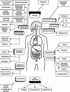 Glands Of The Human Body And The Hormones They Secrete