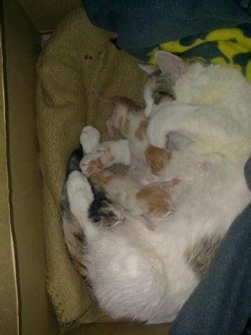 woran erkennt man ob das katzenbaby maennlich oder weiblich