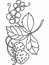 Strawberry Coloring Pages Berries Plant Printable Fruits Recommended Colors Getcolorings sketch template