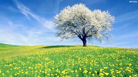 Tree Desktop Wallpaper