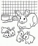 Coloring Rabbit Pet Pages Colouring Rabbits Printable Pets Breeding Bunny Dog Popular Coloringhome Library Clipart sketch template