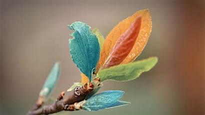 Leaves Colorful Wallpapers Leaf Backgrounds Desktop Nature