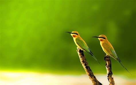 Animated Bird Wallpaper - wallpaper bird gallery