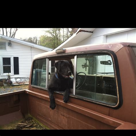 dog hunting truck 114 best images about dogs trucks on pinterest