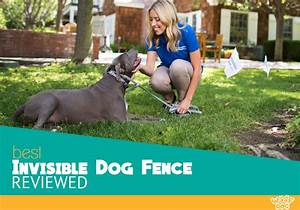 training for invisible fence best fence for security 2017 With best underground electric dog fence