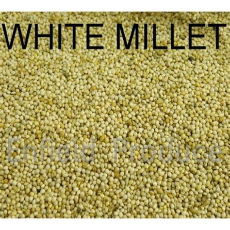 white french millet bird seed for sale shop online or