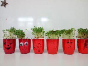 kresse was brauchen pflanzen zum wachsen paul