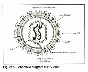 Clinical Aspects Of Hiv Infection In Children