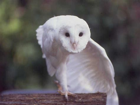 287 Best Images About Amazing Owls On Pinterest