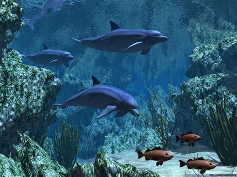 wallpaper dauphin animaux fond d 233 cran