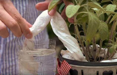 Pflanzen Während Urlaub Bewässern by Mit Diesem Hack Werden Deine Pflanzen Automatisch