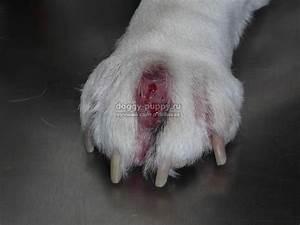 Бородавки у собак на лапах лечение