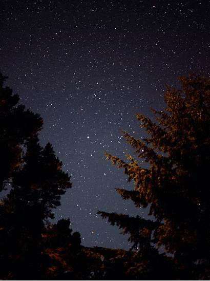 Starry Shooting Forest Magical Night Fairy Sky