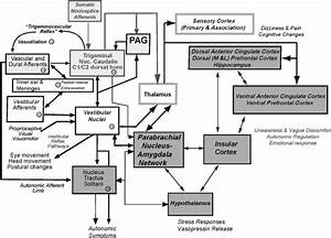 Schematic Diagram Of Pathways That Potentially Explain Co