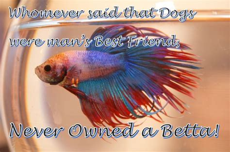 best images about you betta work it on 17 best images about betta pictures on 17