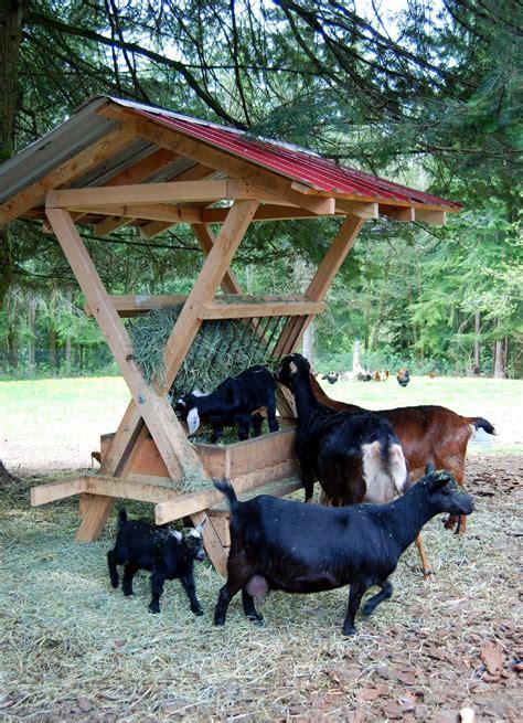 goat hay feeder applegarth farm the goat menagerie