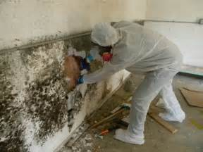 Cleaning Mold Concrete Picture