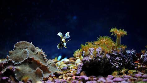 1920x1080 fond d 233 cran aquarium hd 1920x1080 t 233 l 233 charger 7288490