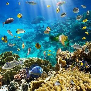 Warming seas and superstorms are destroying aquatic life ...  Aquatic