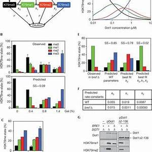 Cell-cycle progression affects the accumulation of H3K79 ...