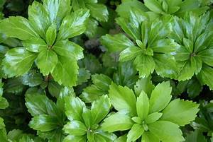 Couvre Sol Vivace : plantes couvre sol espace pour la vie ~ Premium-room.com Idées de Décoration