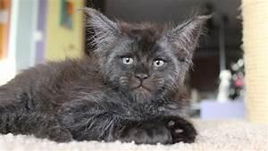Wie Sieht Ein Hummelnest Aus : diese katze sieht aus wie ein mensch watson ~ Yasmunasinghe.com Haus und Dekorationen