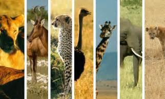 tropical grassland biome animals and plants www pixshark