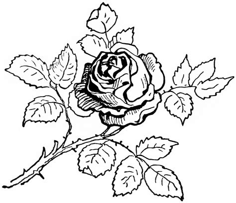 Heart Rose Drawing At Getdrawingscom Free For Personal
