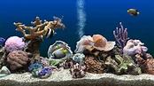 SereneScreen Marine Aquarium 3.3 License Key Download FREE ...