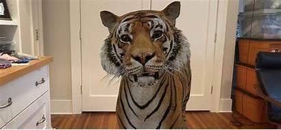 Ar Tiger Animals Google King Augmented Reality