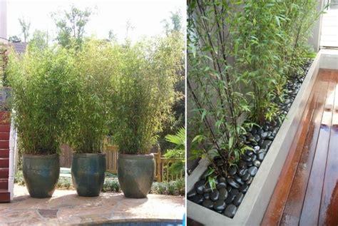 bac a bambou exterieur bambou en pot brise vue naturel et d 233 co sur la terrasse