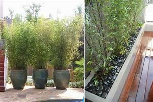 plante brise vue pour terrasse dootdadoocom idees de With idee amenagement jardin avec piscine 11 brise vue balcon en quelques idees interessantes