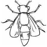 Coloring Bugs Fly sketch template