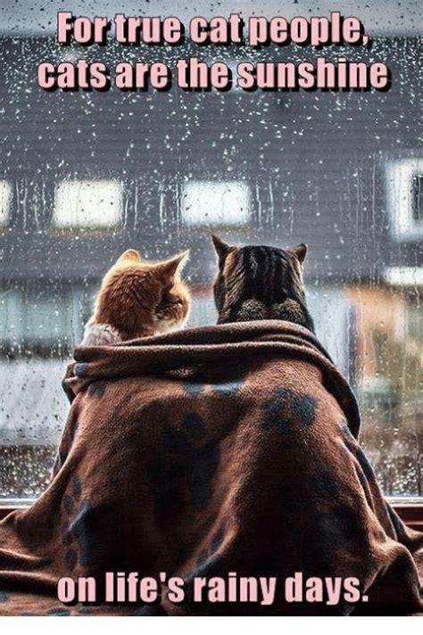 Rainy Day Meme - cats are the sunshine on life s rainy days meme on sizzle