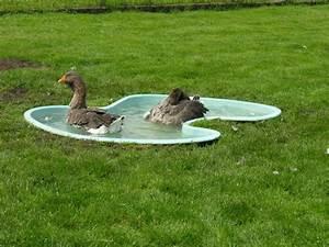 Nettoyer une piscine tres sale daiitcom for Nettoyer une piscine tres sale