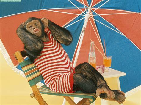 Summer Animal Wallpaper - summer animals newbest photos wallpapers 2013